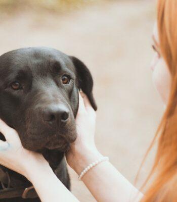 Piensos Holísticos para Perros
