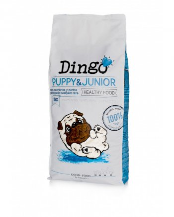 dingo-puppy-junior