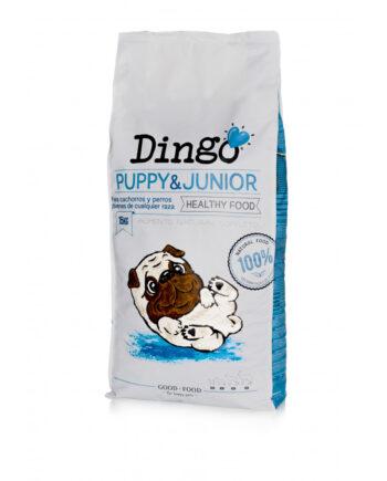 dingo-puppy-junior