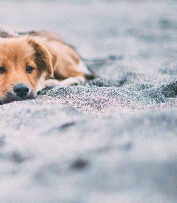 Suplementos Naturales para Perros y Gatos