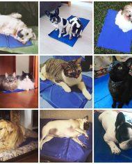 alfombra_refrescante_perros