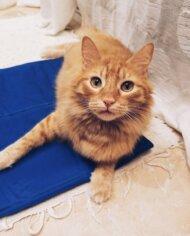 alfombra-refrescante-runi