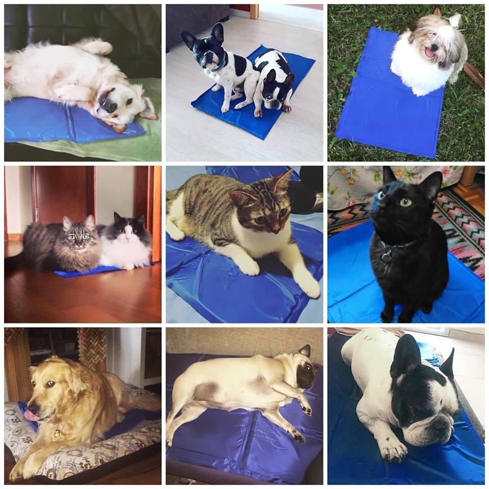 alfombra refrescante perros