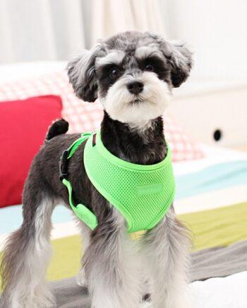 arnes-puppia-neon