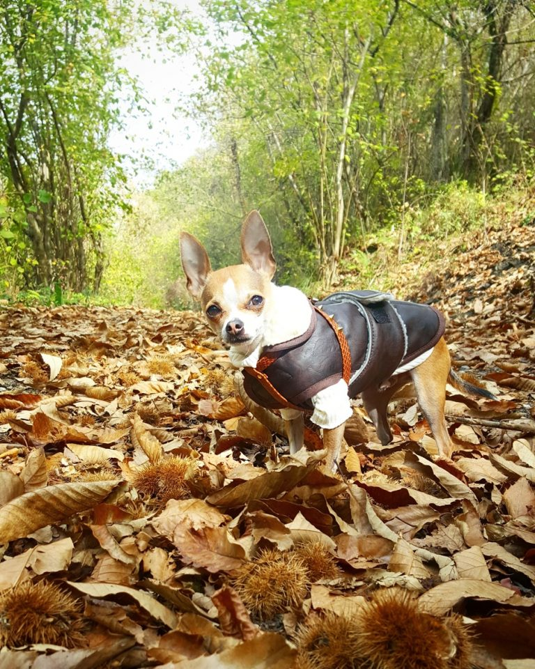 piensos-naturales-perros-mini