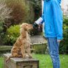 cantimplora_perros