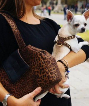 arnés-fashion-perros