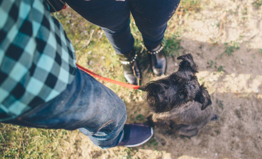 TOP 5 Productos Antiparasitarios eficaces para Perros y Gatos