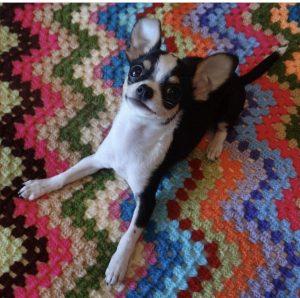 piensos_perros_toy_mini