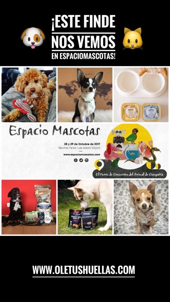 boutique_online_perros_toy