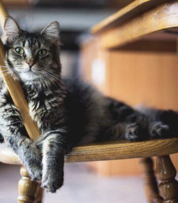 Comederos y bebederos para Perros y Gatos