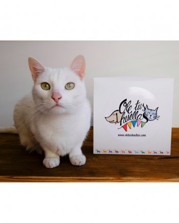 Caja de Navidad para gatos