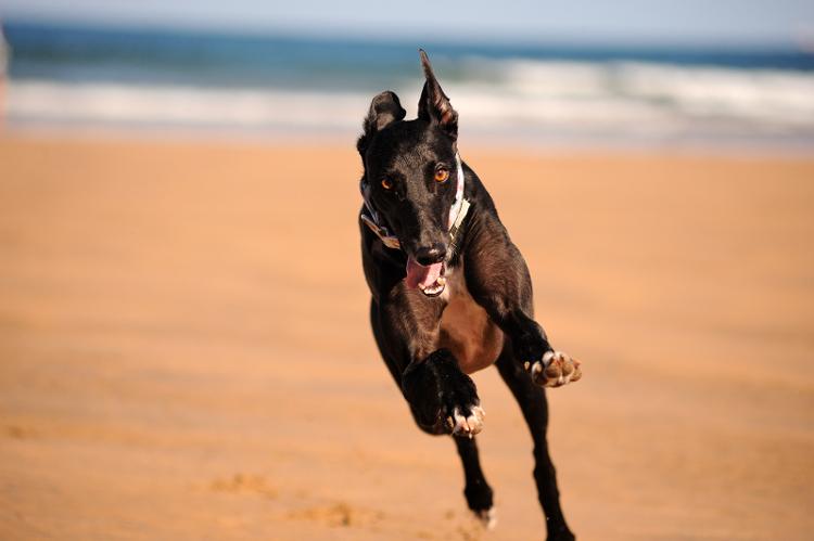 playas_admiten_perros_cantabria_asturias