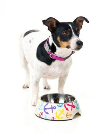 comedero_originales_para_perros