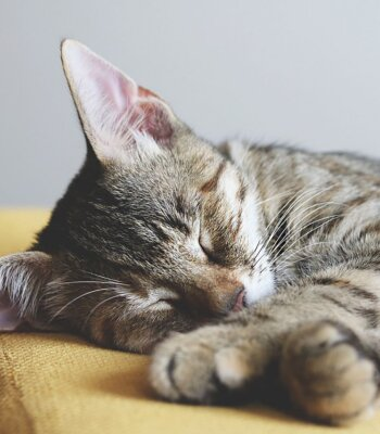 Antiparasitarios para Gatos