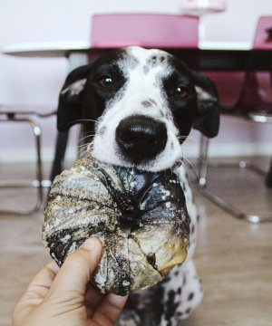 snacks-naturales-perros