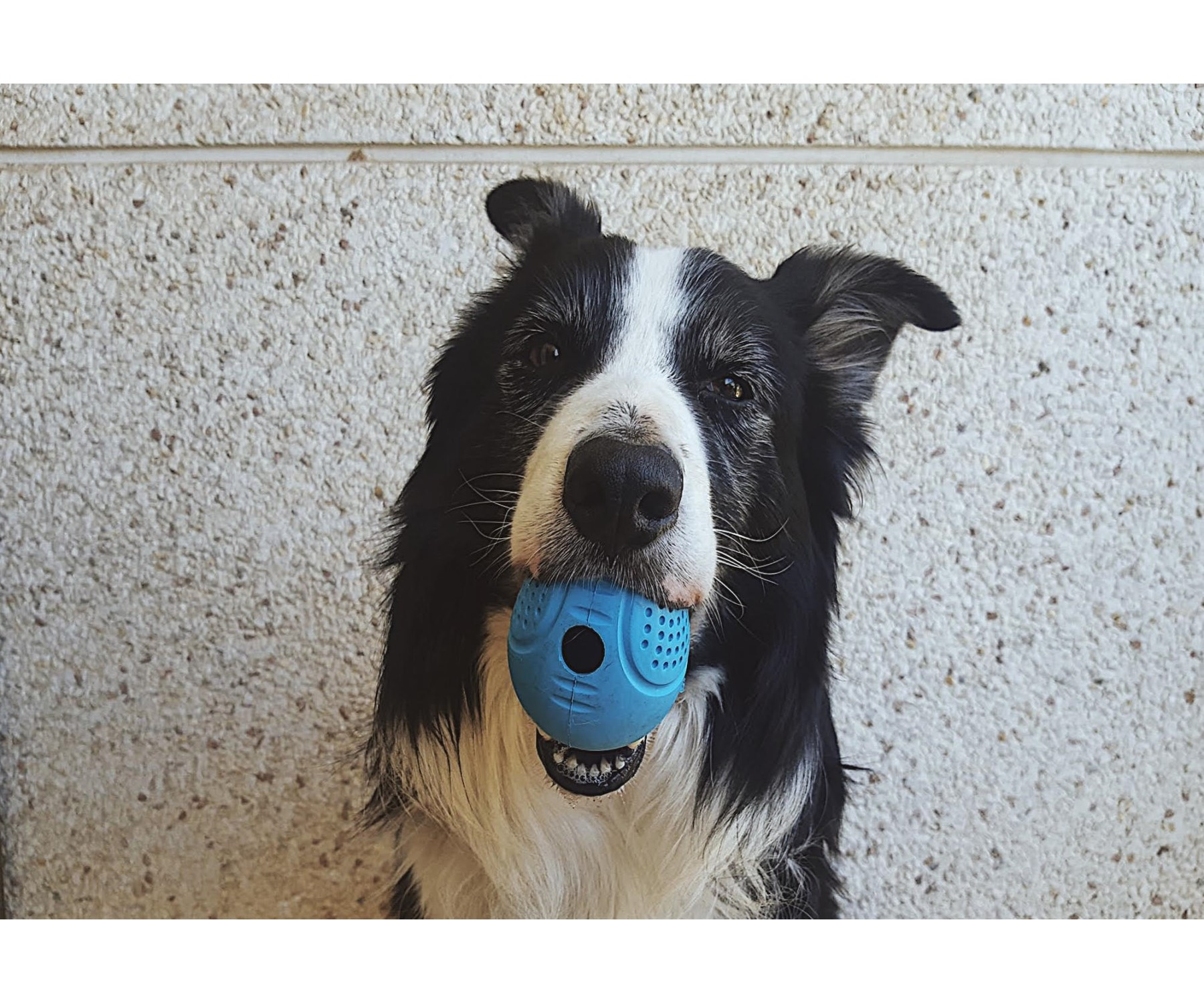 huevito-interactivo-perros-juguete