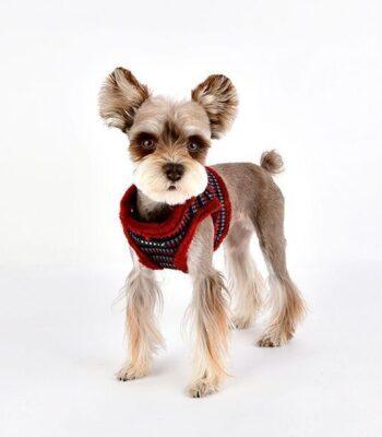 Arnés Elliot B Puppia
