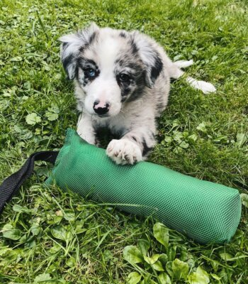 motivador-perros