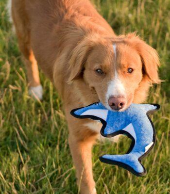 David, el Delfín XL Eco-friendly