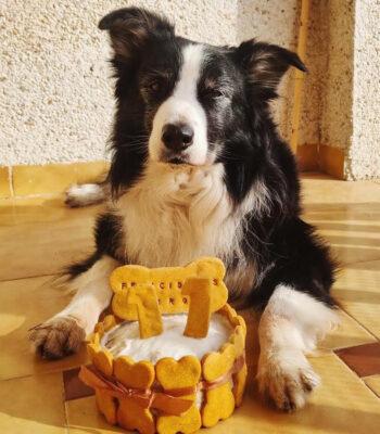 Tarta de Cumpleaños de Atún para Perros